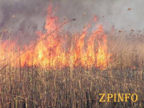 Огнем охвачены трава и камыш