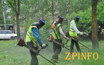 Коммунальщики вступили в неровные бои с сорняками