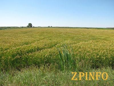 На земельную реформу в Запорожской области пошло 190 тыс. грн.