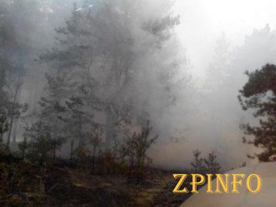 Неизвестные совершили поджог Национального заповедника «Хортица»