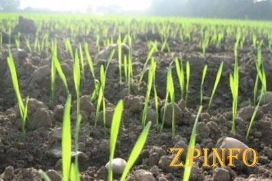 Запорожские аграрии работают над сохранением урожая озимых культур
