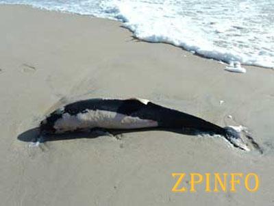 Под Запорожьем во время шторма погибли дельфины