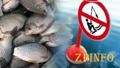 С 1 ноября в Запорожской области лов рыбы запрещён