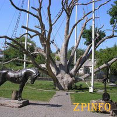 У Запорожского 700-летнего дуба отвалилась еще одна ветка