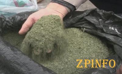 У безработного жителя Запорожья нашли 40 кг марихуаны и оружие