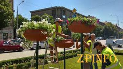 Улицы и площади Запорожья заполонят цветы
