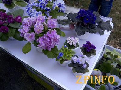 В Дубовой Роще прошел фестиваль цветов