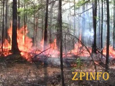 В Луганской области загорелось 150 га леса (Видео)
