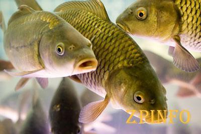 В малый водоем Дубовой рощи запустили рыбу