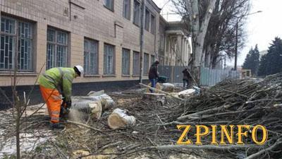 В старом центре Запорожья массово пилят деревья