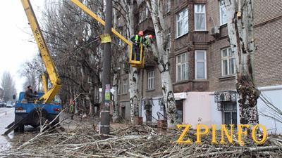 В центральном районе Запорожья обрубят сотни деревьев