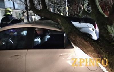 В Запорожье деревья упали на авто