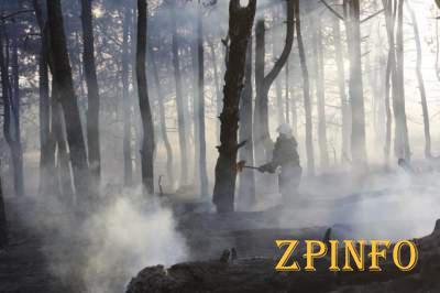 В Запорожье масштабный пожар охватил Хортицу