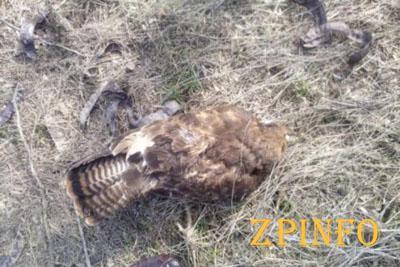 В Запорожье массово гибнут птицы