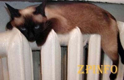 В Запорожье массово отключили отопление