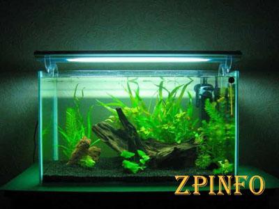 В Запорожье мужчина украл огромный аквариум