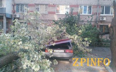 В Запорожье на автомобиль рухнуло дерево