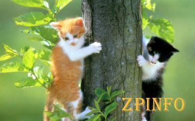 В Запорожье на дереве застряли котята