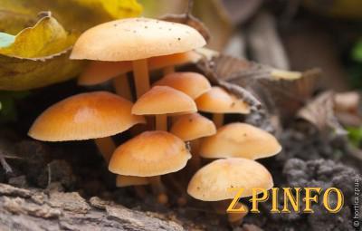 В Запорожье на Хортице растут несъедобные грибы