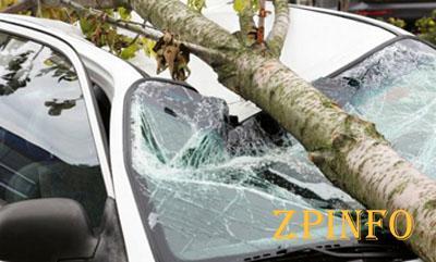 В Запорожье на легковушку рухнуло дерево