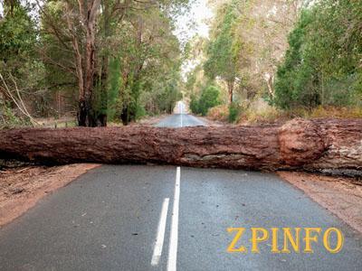 В Запорожье на проезжающий автомобиль упало дерево