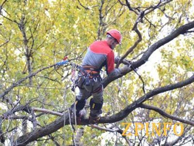 В Запорожье начинается кронирование деревьев во дворах жилых домов
