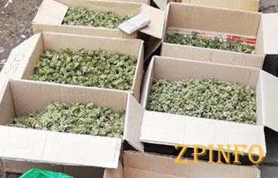 В Запорожье накрыли крупный склад наркотиков