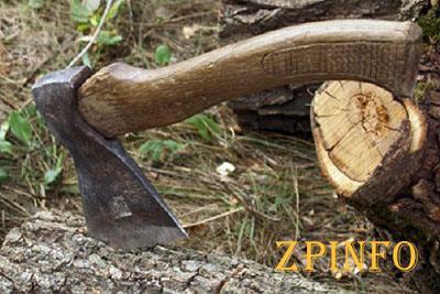 В Запорожье орудовали черные лесорубы