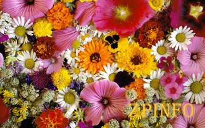 В Запорожье отменили фестиваль цветов