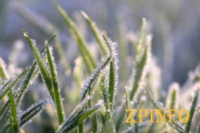 В Запорожье ожидаются заморозки