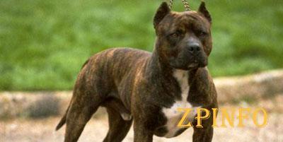 В Запорожье пес загрыз своего хозяина - пьяницу