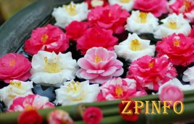 В Запорожье покажут шедевры из 10 тысяч цветов