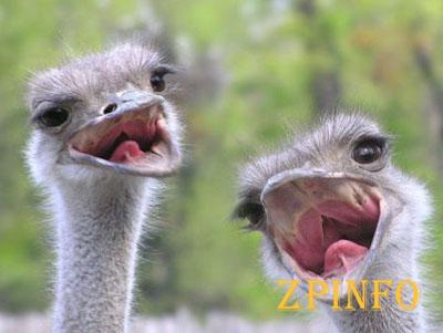 В Запорожье поселился выводок страусов