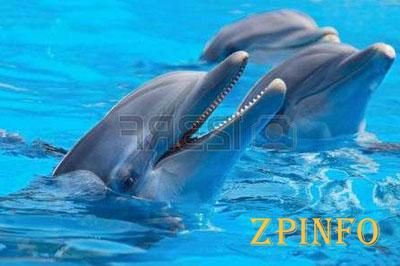 В Запорожье предлагают построить дельфинарий