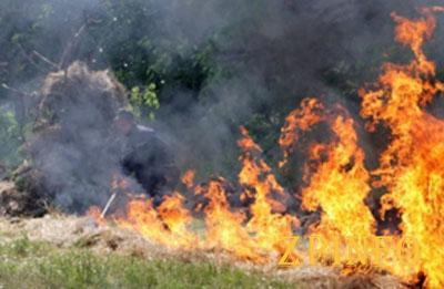 В Запорожье произошел пожар на зеленой зоне