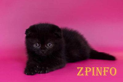 В Запорожье спасали котенка