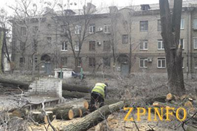 В Запорожье проводят кронирование старых деревьев