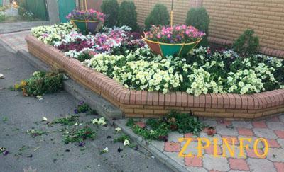 В Запорожье пьяная женщина рвала цветы на чужой клумбе