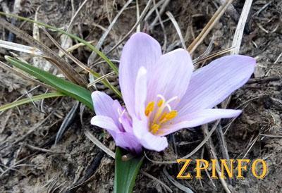 В Запорожье распустились первые цветы