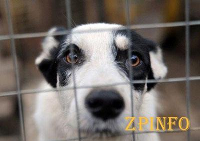 В Запорожье состоится марш за права животных