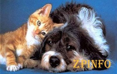 В Запорожье создадут электронную базу домашних животных