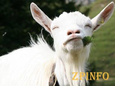 В Запорожье спасали козу