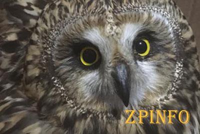 В Запорожье спасли сову