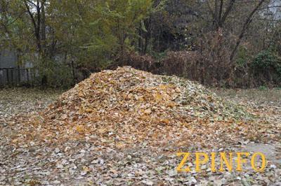 В Запорожье убрали меньше половины осенней листвы