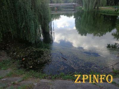 """В Запорожье в """"Дубовой роще"""" планируют осушить один из водоемов"""