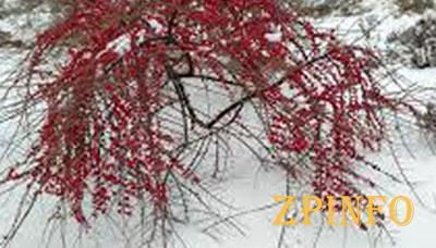В Запорожье выпал долгожданный снег