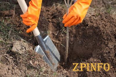 В Запорожье высадили 1 тысячу новых деревьев