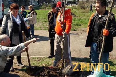 В Запорожье высадили молодые дубы