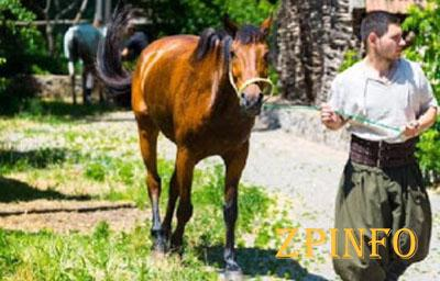 В Запорожье заработал конный театр
