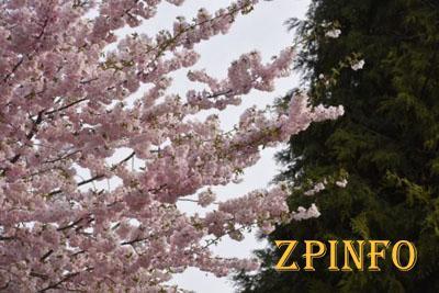 В Запорожье зацвело экзотическое дерево